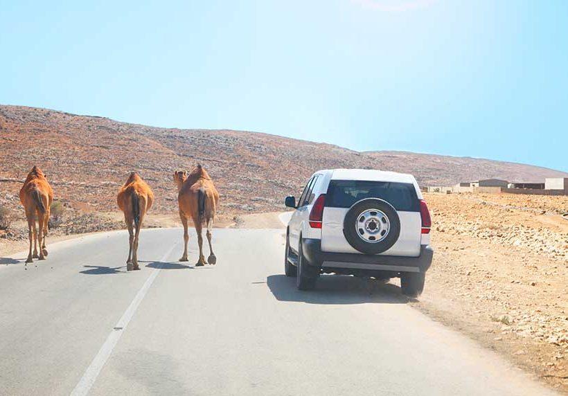 La guía de tráfico esencial para conducir por el mundo