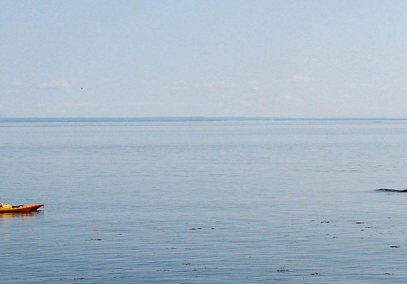 Avistamiento de ballenas, una aventura solo para valientes