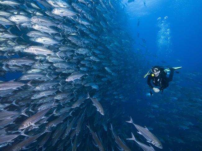 La Isla del Coco y el buceo: un destino increíble en Latinoamérica.