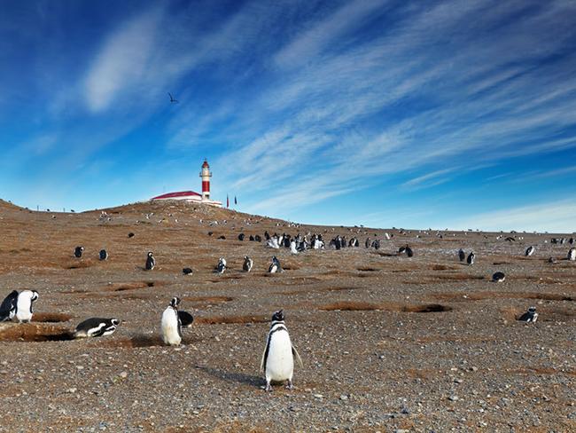Horóscopo de viaje_Punta Arenas